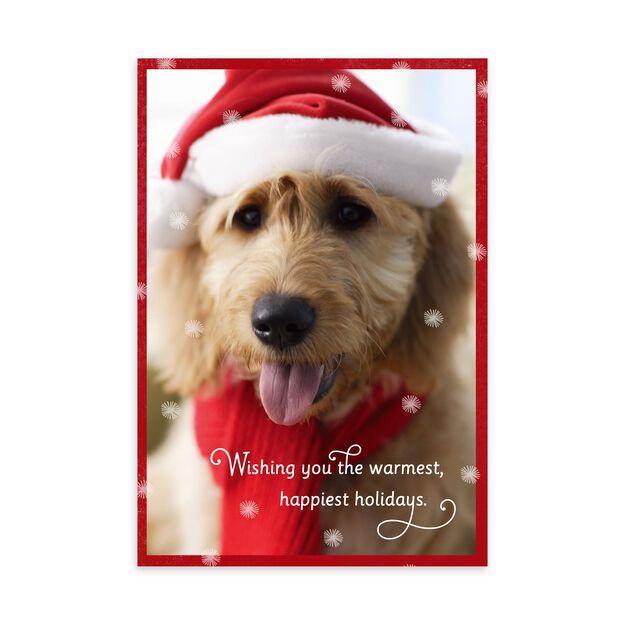 Dog in Santa Hat Holiday Card